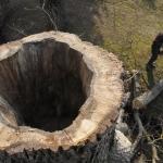 Železné – redukce ořechu